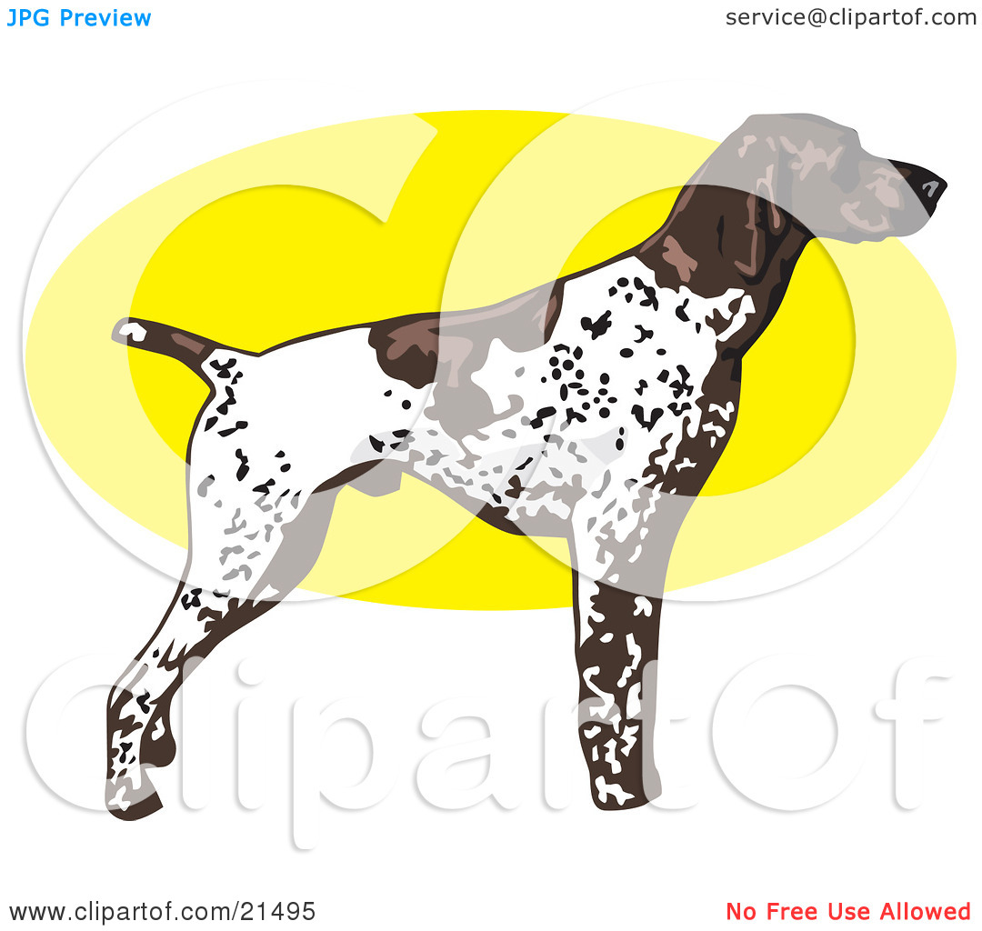 Clipart Illustration of a White And Brown Spotted German Shorthair.