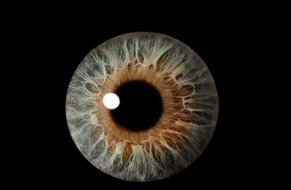 Best Brown Eyes Clipart #18281.