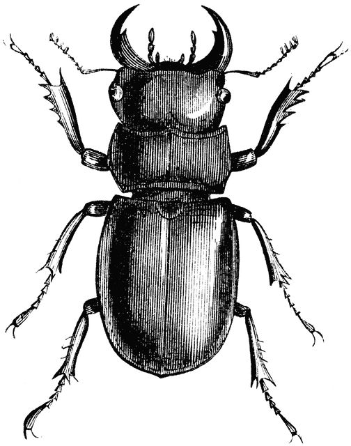 1000+ ideas about Longhorn Beetle on Pinterest.