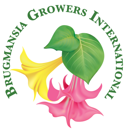 Brugmansia Growers (@bruggrowersintl).