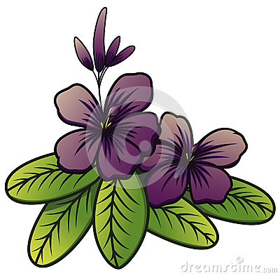 Violet Brunfelsia Jasmine Flower Stock Illustrations.