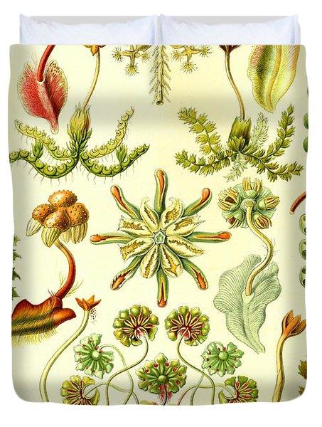 Liverworts Moss Brunnenlebermoos Haeckel Hepaticae Drawing by.