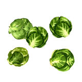 Sprouts Stock Illustrations.