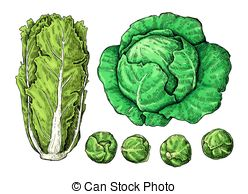 Brussel sprouts Illustrations and Clip Art. 58 Brussel sprouts.