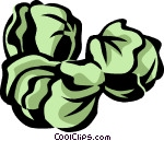 Brussels sprouts Vector Clip art.