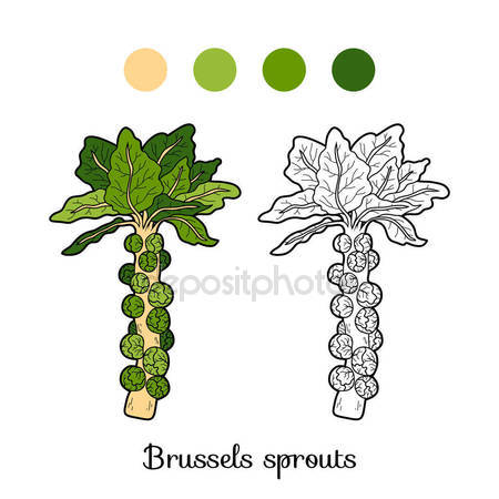 Brussels sprouts Stock Vectors, Royalty Free Brussels sprouts.