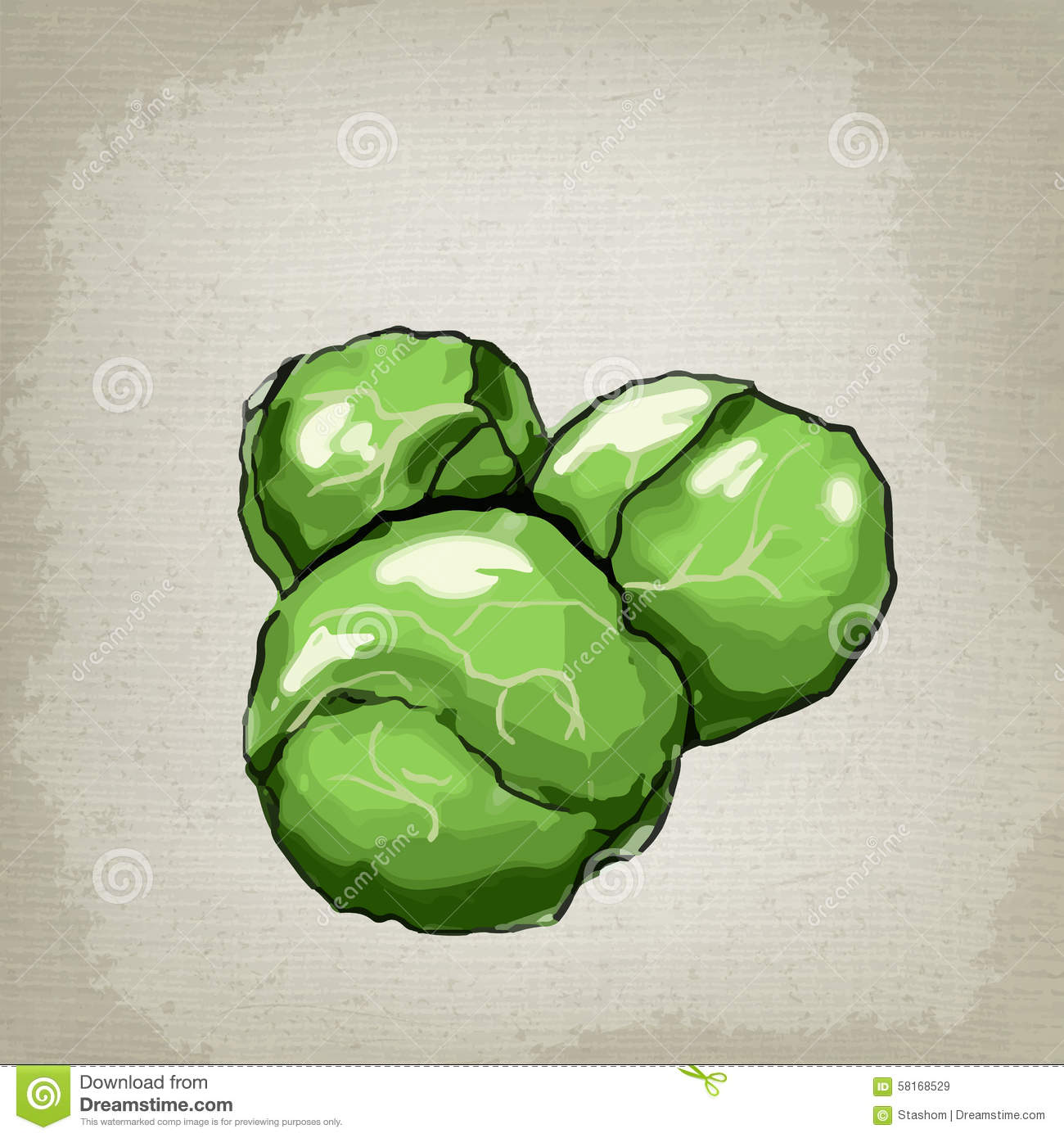 Brussels Sprouts Vector Illustration. Stock Vector.