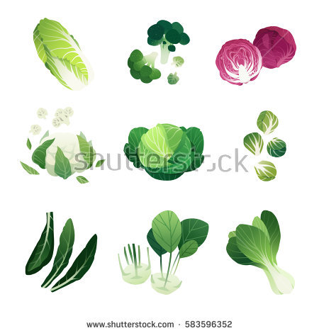 Brussel Sprouts Isolated Stock Vectors, Images & Vector Art.