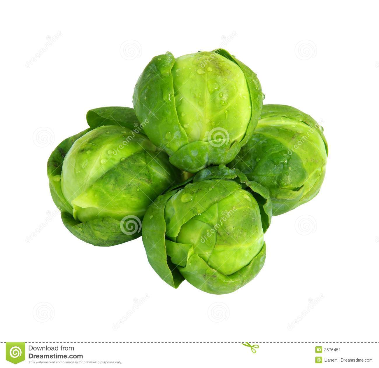 Brussel sprout clipart free.