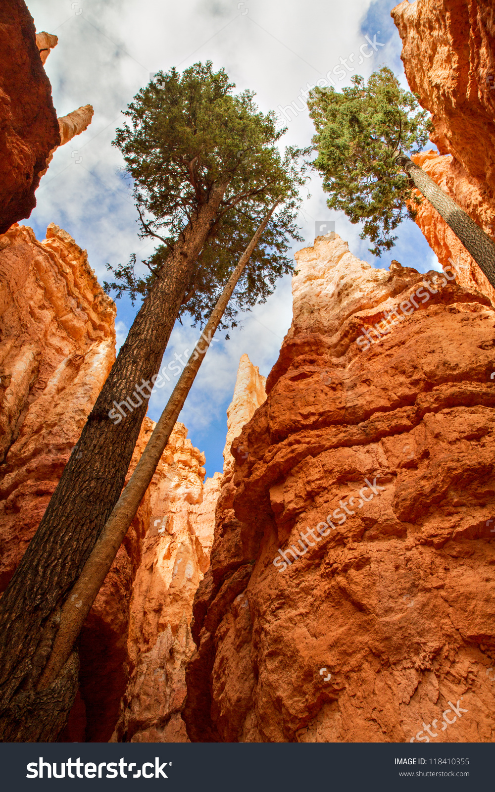 Pine Trees Bryce Canyon National Park Stock Photo 118410355.