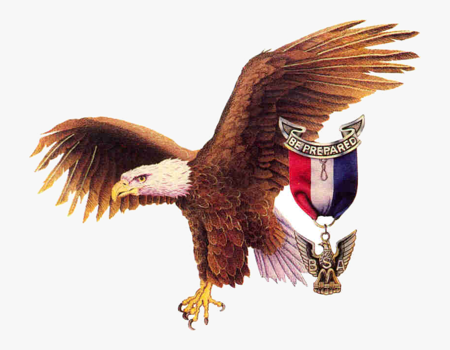 Eagle Scout Bsa Clipart Collection Clip Art Transparent.