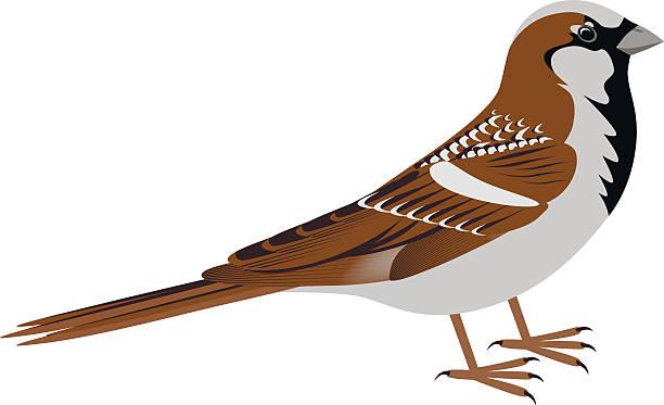 Sparrow Bird Clipart.