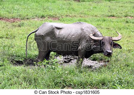 Stock Images of Carabao WB.