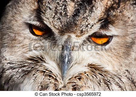 Clip Art of Royal owl.