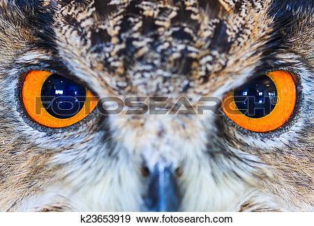 Stock Photograph of Eagle Owl (Eurasian eagle owl) Bubo bubo.