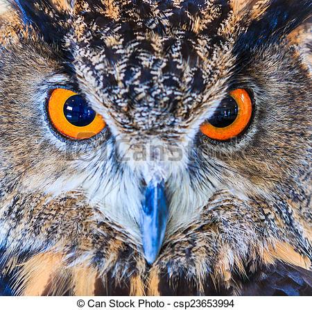 Stock Photographs of Eagle Owl (Eurasian eagle owl) Bubo bubo.