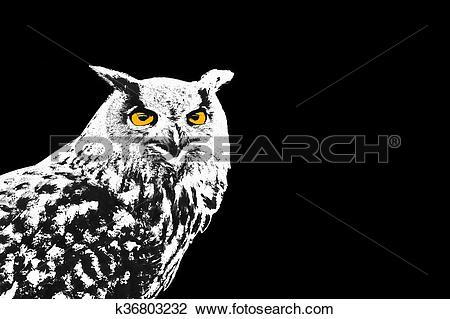 Clip Art of Owl, Bubo Bubo, illustration k36803232.