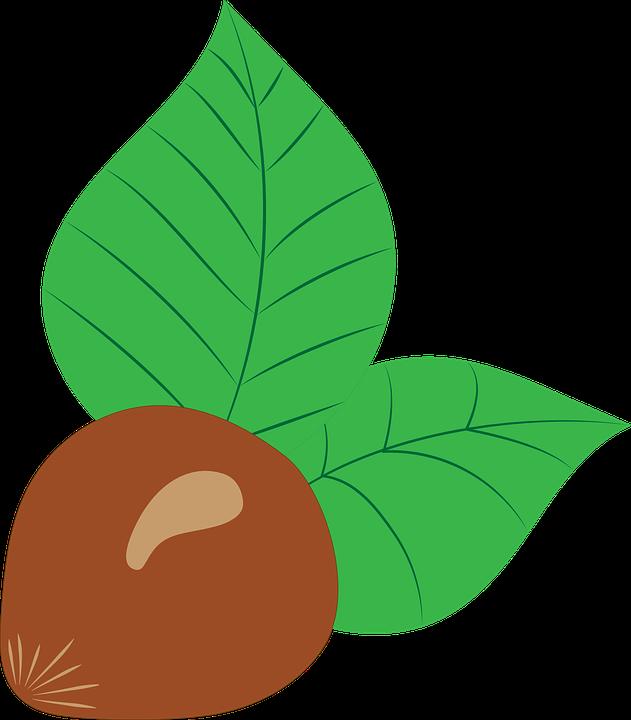 Chestnut, Fruit.