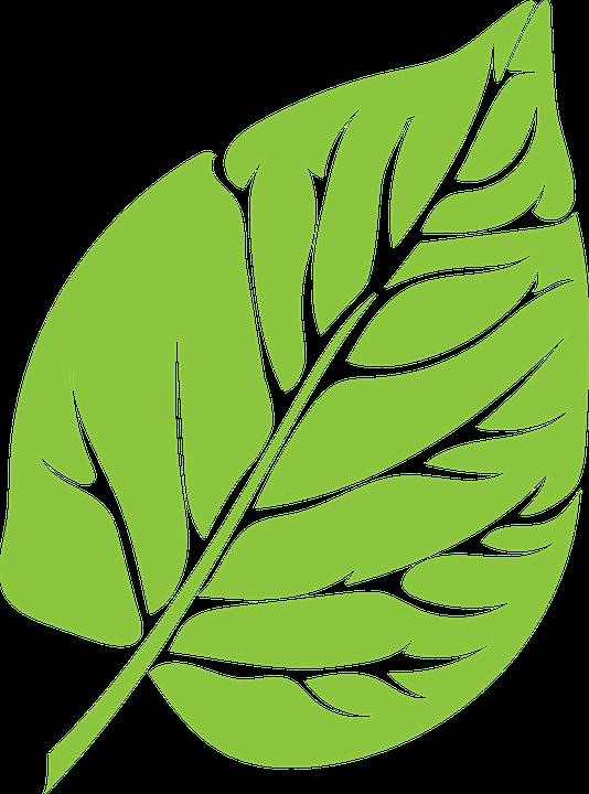 免费矢量图: 叶, 绿色, 茂盛, 增长, 绿叶, 绿色的树叶, 叶子, 有机.
