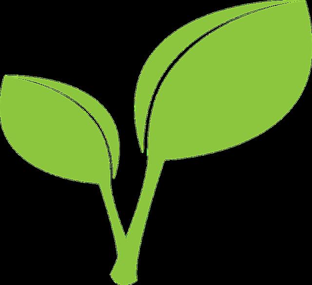 免费矢量图: 绿色, 叶, 叶子.