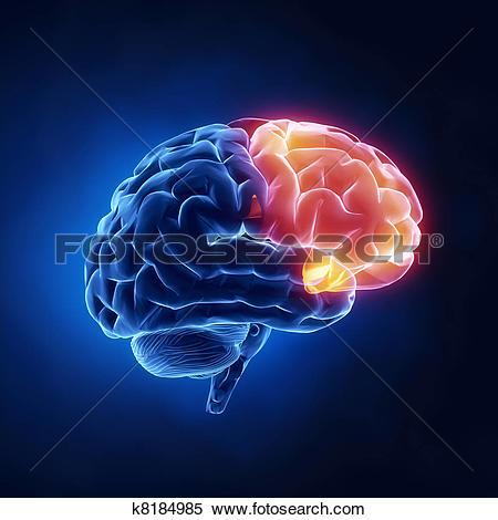 Stock Illustration of Frontal lobe.