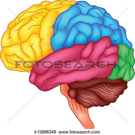 Clipart of Cerebral hemisphere and cerebellum, canine mva31011.