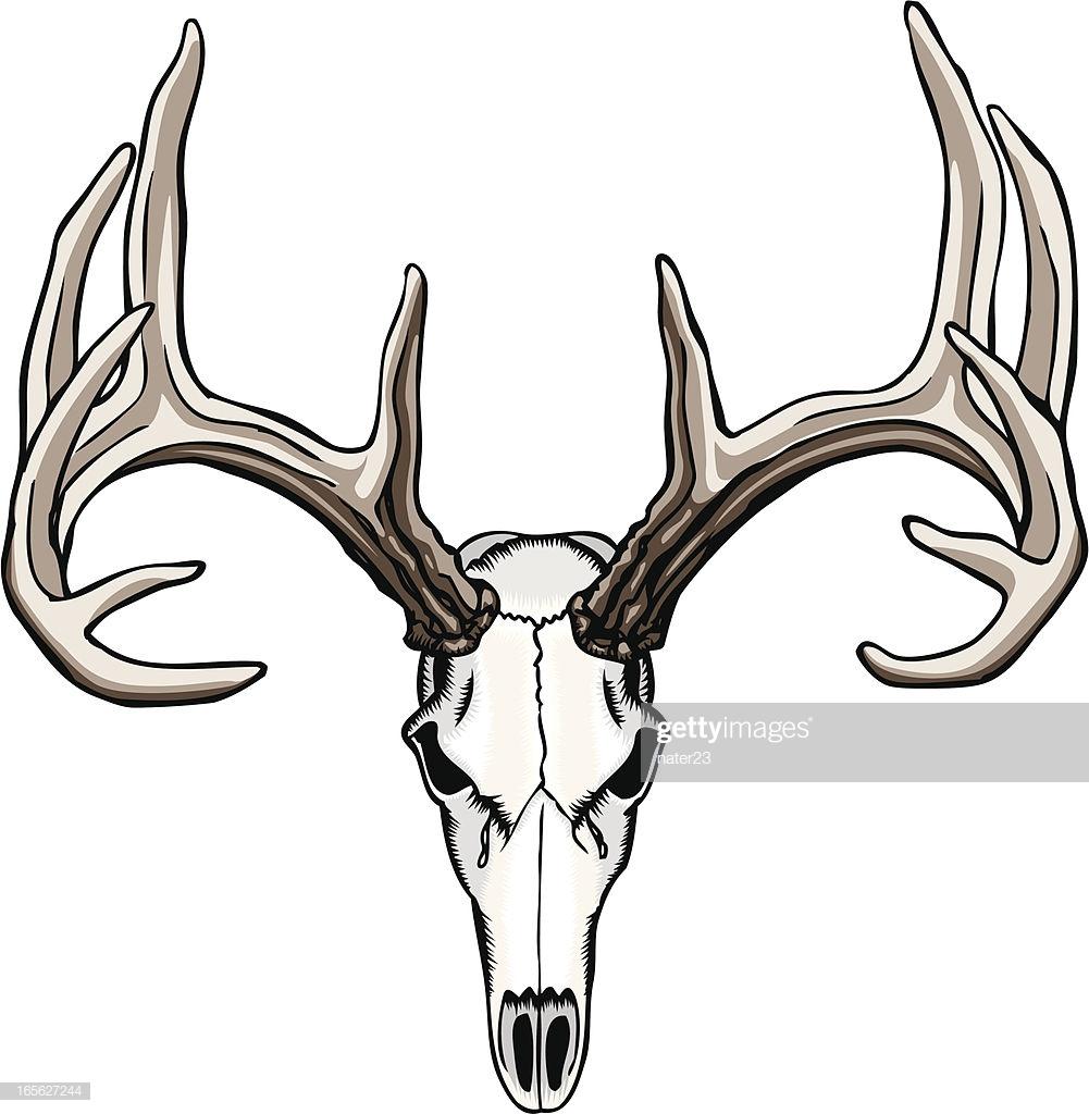 60 Top Deer Stock Illustrations, Clip art, Cartoons, & Icons.