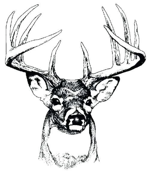Deer Head Art Buck Clip Images.