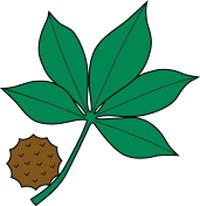 Buckeye leaf clip art.