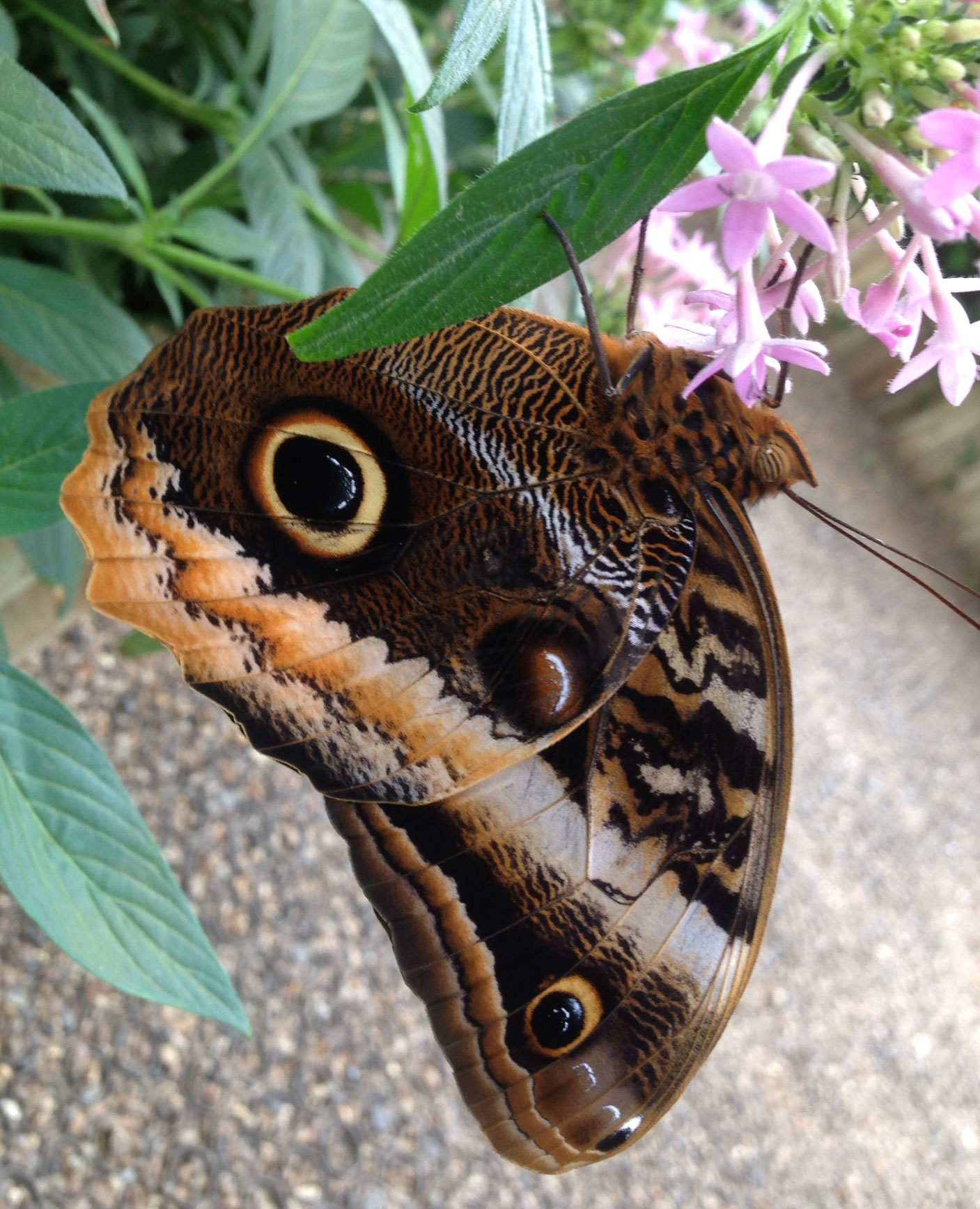 NaturePlus: What's new at the Museum : Tags : butterflies.