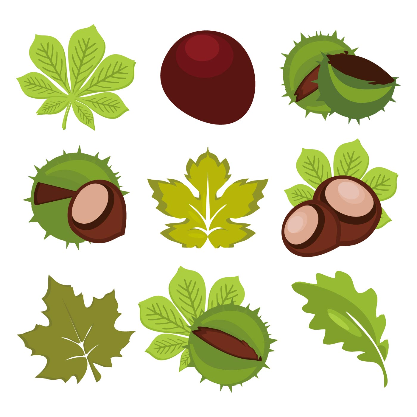 Aesculus Free Vector Art.