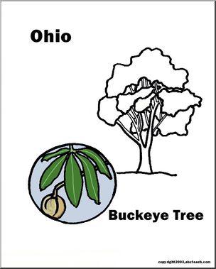Ohio: State Tree.