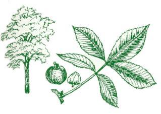 SCFC Tree Identification for SC.
