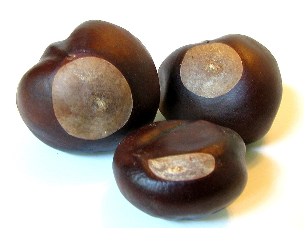 Lucky Number Three Buckeye Nuts Tree Seeds by bytheinch on Etsy.