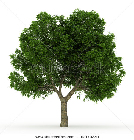 3d Tree Stock Photos, Royalty.