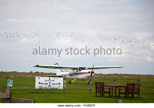 Flock Of Birds And Plane Stock Photos & Flock Of Birds And Plane.