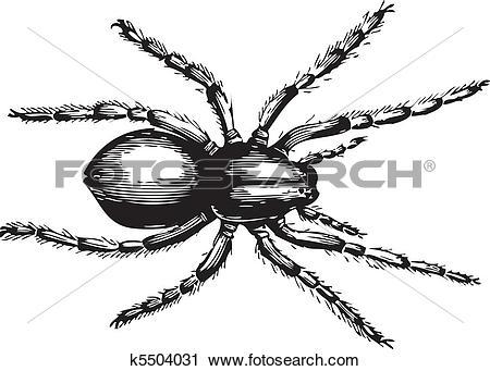 Clipart of Lycosa fatifera or Wolf Spider k5504031.