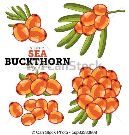 Vector Clipart of Sea Buckthorn Set, Vector..
