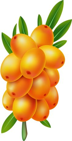 Antique Images: Free Digital Fruit Images Vintage Clip Art Apple.