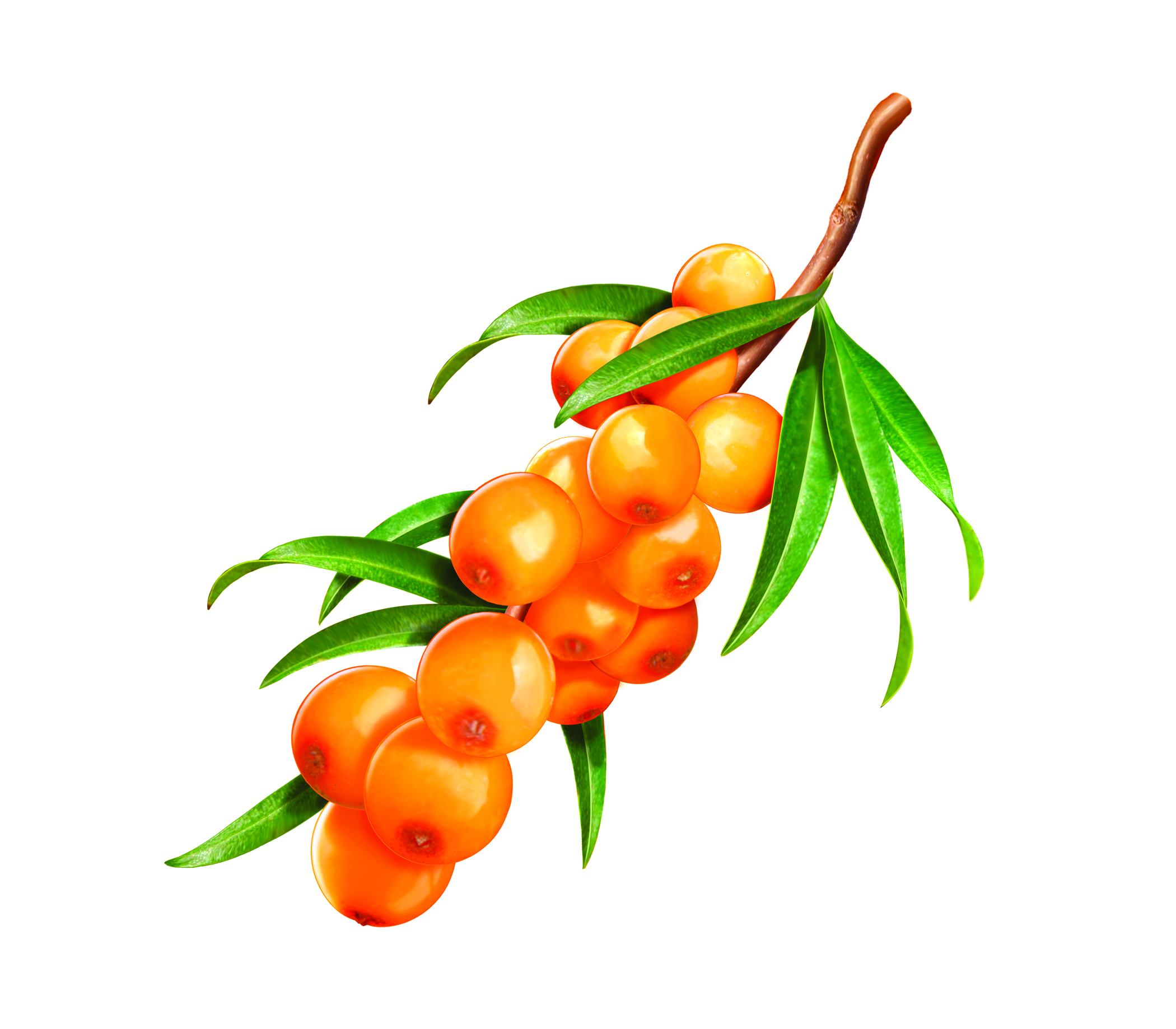 Sibu Beauty's Line of Sea Buckthorn Berry.