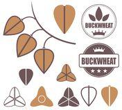 Buckwheat Stock Illustrations.