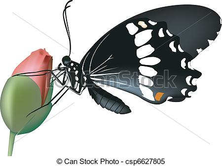 Clipart Vector of rose.