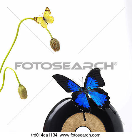 Stock Photo of object, object, bud, butterfly, insect, yellow.