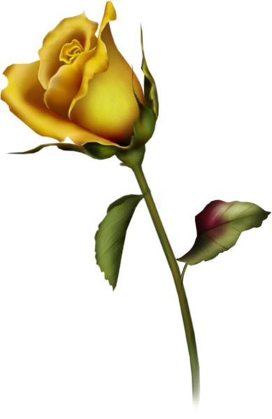 Yellow Rose Bud Clip Art.