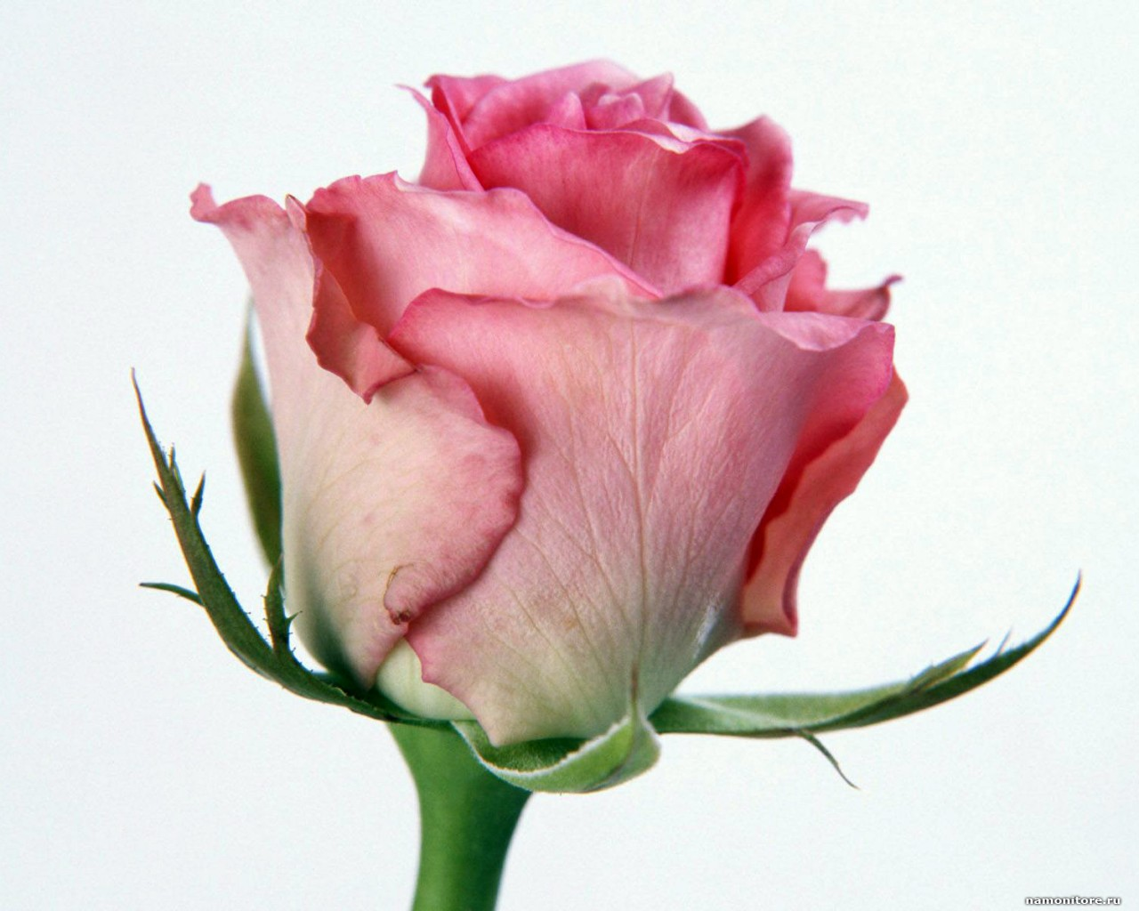 Pink Rose Bud Clip Art.
