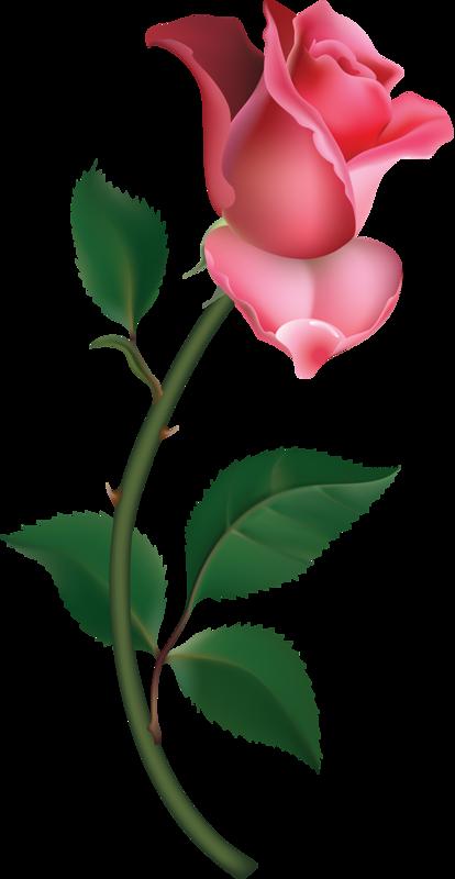 Rose bud clip art.