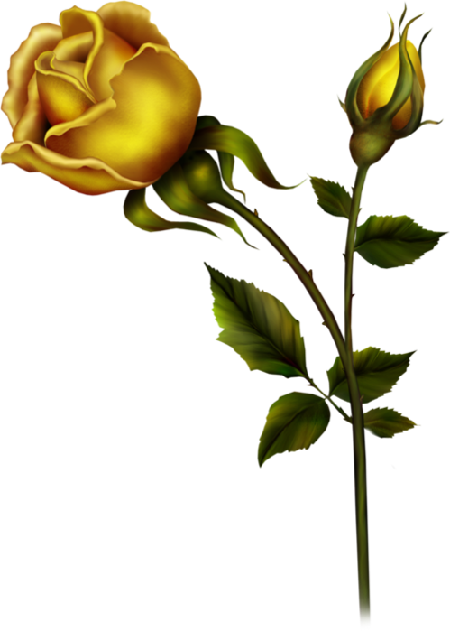 Yellow Rose with Bud PNG Clipart.