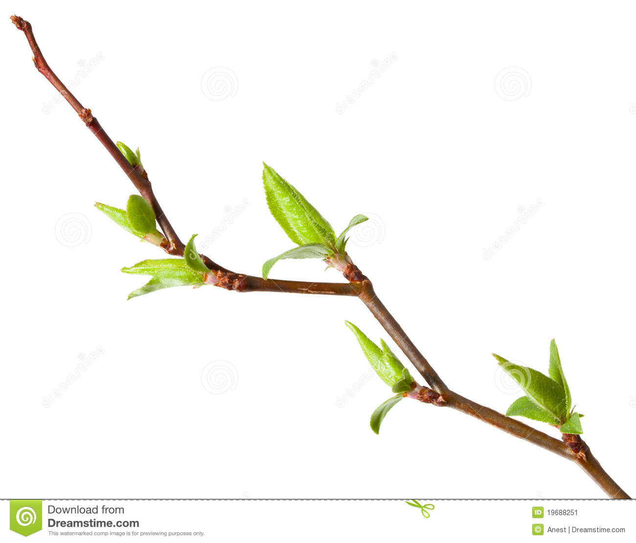 Budding Tree Clipart.