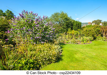 Stock Photography of Butterfly bush, Violet butterfly bush, Summer.