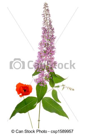 Picture of buddleia and poppy bouquet.